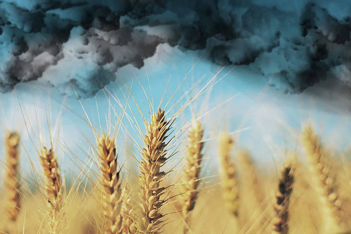 Dark clouds for barley farmers