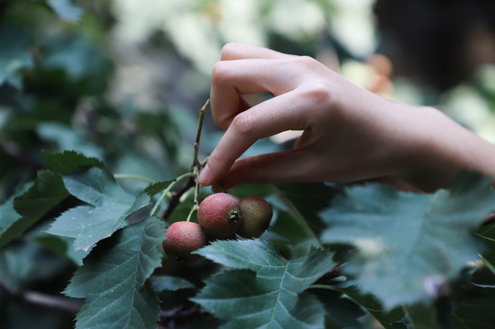 More calls to clean up fruit picking